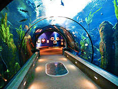 Image of AQUARIUM OF THE PACIFIC